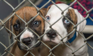 The Humane Society of Huron Valley is a community of people who love animals and rescue them to give them new homes.