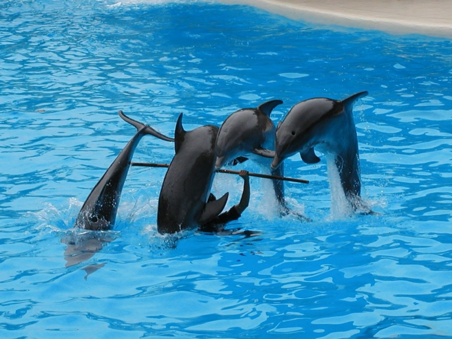 Marine entertainment has been enjoyed for a long time, but people don't know that animals are often kept too long in captivity and are unable to return successfully to the wild.