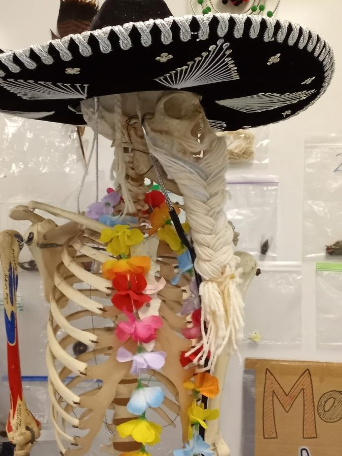 """The skeleton in Ms. Kotlinski's room named Mr. Cartman for its beard. """"The braid on the skeleton makes a funny scene,"""" seventh grader Judy Bai says. It's not everyday that you see a skeleton with the beard!"""""""
